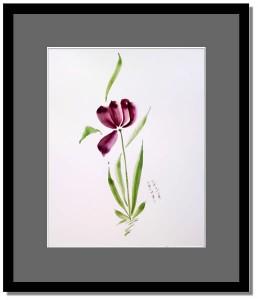 tulip_2009_07_05_01
